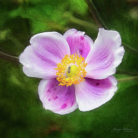 Anenome Ant 2 by George Moore