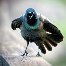Angry Bird by Judi Dressler