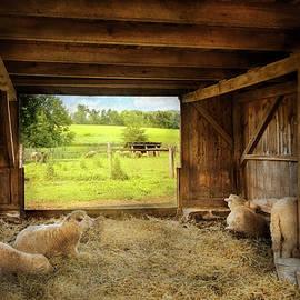 Animal - Sheep - Counting sheep by Mike Savad