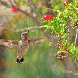 Annas Hummingbird 1 by Linda Brody