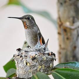 Anna's Hummingbird and Her Babies by Lynn Marie Sharp