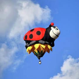 Annie the Ladybug by Donna Kennedy