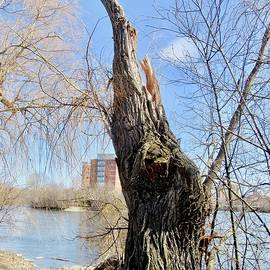 Another Broken Willow by Stephanie Moore