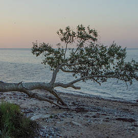 Another tree had fallen by Juergen Hess