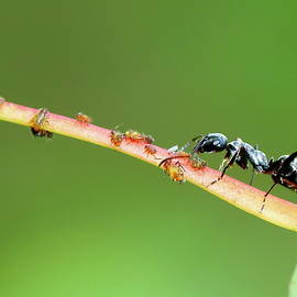 Ant macro by Alex Nikitsin