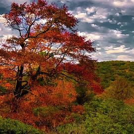 Appalachian Red Tree by Norma Brandsberg