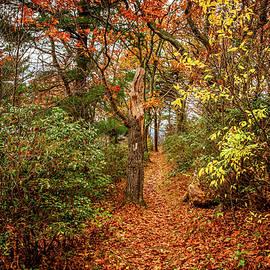 Appalachian Trail in Shenandoah National Park by Gestalt Imagery