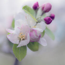 Apple Blossom by Maria Ismanah Schulze-Vorberg