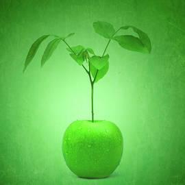 Apple Tree by Wim Lanclus