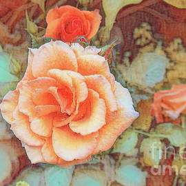 Apricot rose by Birgitta Astrand