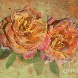 Apricot Roses by Michelle Meenawong