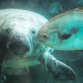 Aquatic Harmony  by Susan Hope Finley