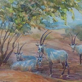 Arabian Maha by Abdelwahab Nour