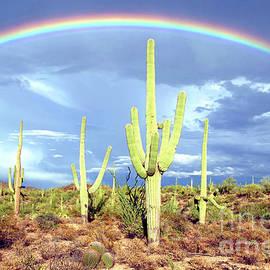 Arizona Desert Rainbow by Douglas Taylor