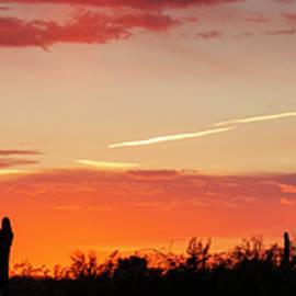 Arizona Desert Sunset Panorama by Teresa Wilson
