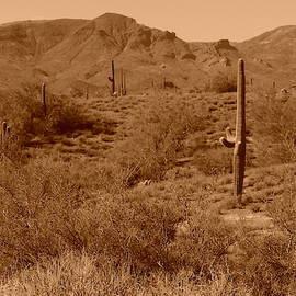Arizona Desert Vista by Bill Tomsa