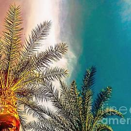 Arizona Sky Palm Trees by Amyn Nasser Photographer