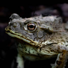 Arizona Toad by Bonny Puckett