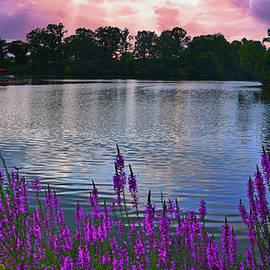 Armco Lake Loosestrife  by Randall Branham