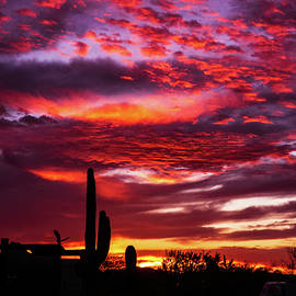 Arthur Pack Park Sunset 2 by Dianne Milliard