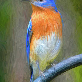 Artistic Bluebird by Jerry Griffin