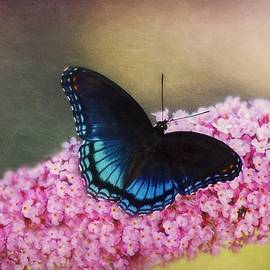 Artistic Red-Spotted Purple Butterfly by Marilyn DeBlock