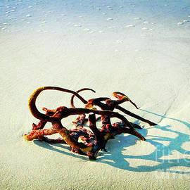 Aruba Coral by Tina Uihlein