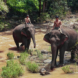 Asian Elephants With Riders In A River by Sergio Florez Alonso