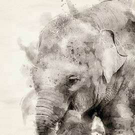 Asiatic elephant by Darren Wilkes