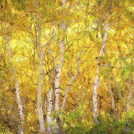 Aspen Glow - Painterly by Donna Kennedy