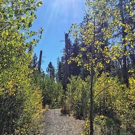 Aspen Grove at Shevlin Park by Dana Hardy