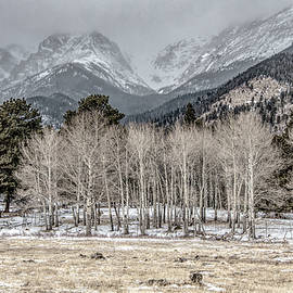 Aspen Skies, Desaturated Color by Marcy Wielfaert