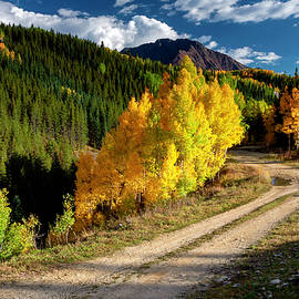 Autumn Aspens in Colorado by Gary McJimsey