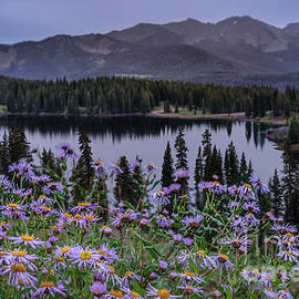 Asters Blooming Above Lake Irwin by Priscilla Burgers