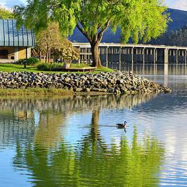At the Lagoon by Richardson Bay by Brian Tada