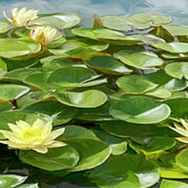 At the Lily Pond by Teresa Wilson