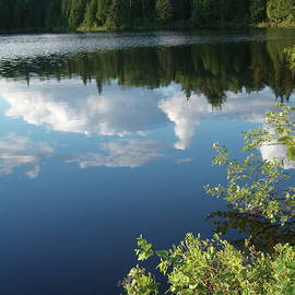 At the Pond by Tom Halseth