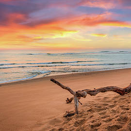 Atlantic Ocean Driftwood by Bill Wakeley