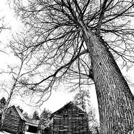 Attack of the Killer Tree bw by Dan Carmichael