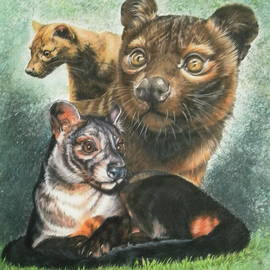 The Fossa of Madagascar by Barbara Keith