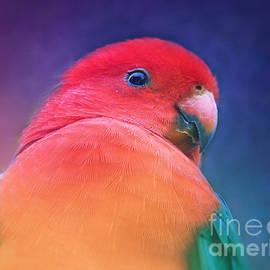 Australian King Parrot by Trudee Hunter