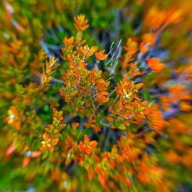 Autumn Abstract 2020 by Kathi Isserman