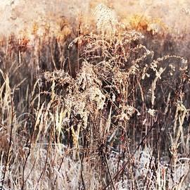 Autumn Abstract #4 by Slawek Aniol