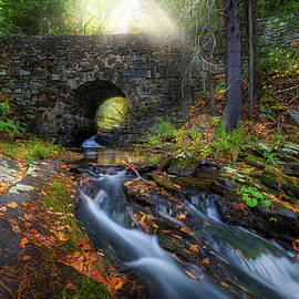 Autumn Arch by Bill Wakeley