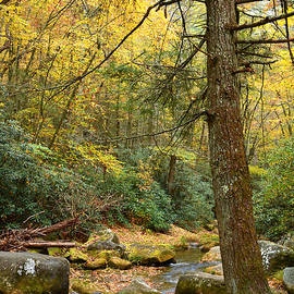 Autumn at Stone Mountain State Park by Dianne Sherrill