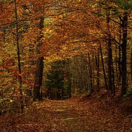 Autumn Avenue by Benjamin Roberts