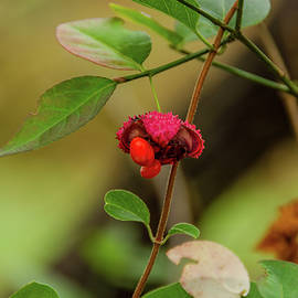 Autumn Berry Cades Cove by Douglas Wielfaert