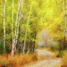Autumn Birch Path by Terry Davis
