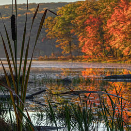 Autumn Cattails by Angelo Marcialis