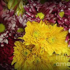 Autumn Blossoms - Mums by Dora Sofia Caputo